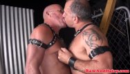 Mature gay links Leather fetish bear barebacks chubby mature