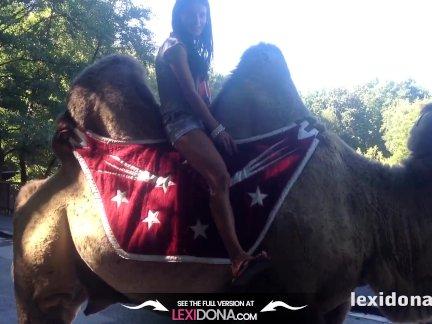 Лексидона-верблюд